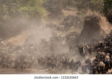 Wildebeests Mara river crossing, Masai Mara