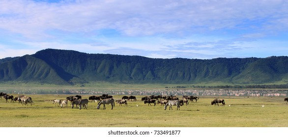 Wildebeests in the Ngorongoro Crater, Tanzania, dramatic sky in the background