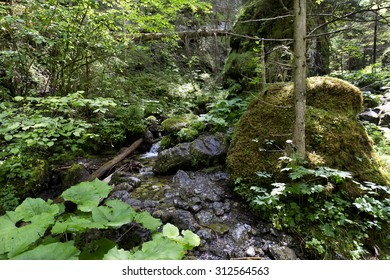 Wilderness about the Creek in summer Low Tatras in Slovakia