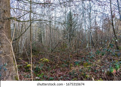 The wilderness of a big forest with thorns and spines
