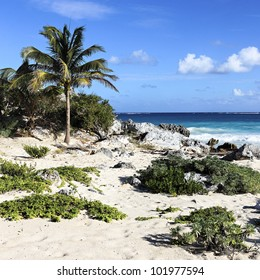 wilderness caribbean beach in summer in Mexico