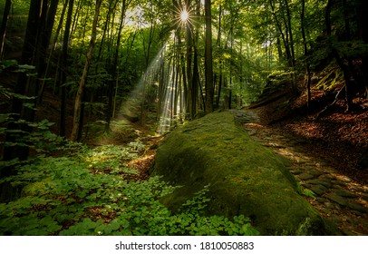 Wilderness forest trees sunbeam background. Sunbeams forest. Forest sunbeams shadows. Shadows in sunbeams forest