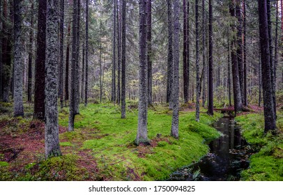 Wilderness mossy forest trees background. Mossy forest winlderness scene. Deep forest trees green moss view