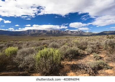 Wilderness Vegetation Mountains Landscape Wilderness rugged Karoo vegetation plants with distant scenic mountains landscape