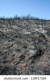 Wildfire ash and burned bushes on grey stone ground