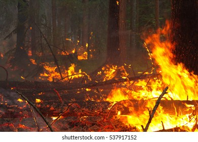 Wildfire burning in Siberian taiga forest