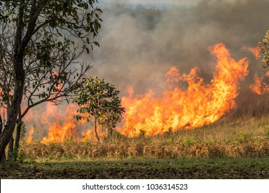 Wildfire is burning trees and dry grass in the forest.