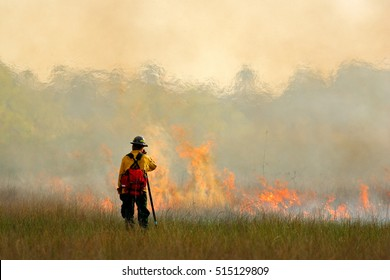 Wildfire in Everglades, grass in flame and fume. Fire fighter working with wildfire. Wildlife scene from nature. Forest from in February, Florida, USA.