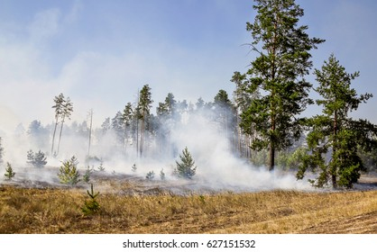 A wildfire in forest due to continuous dry weather in summer.