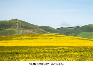 A wildflower bloom covers a pasture in a blanket of yellow in early springtime