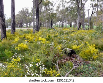 Wildflower Carpet Western Australia