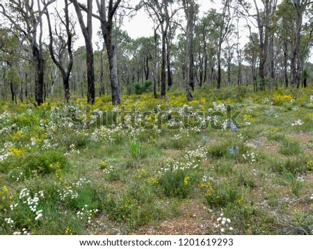 Wildflower Carpet in Western Australia