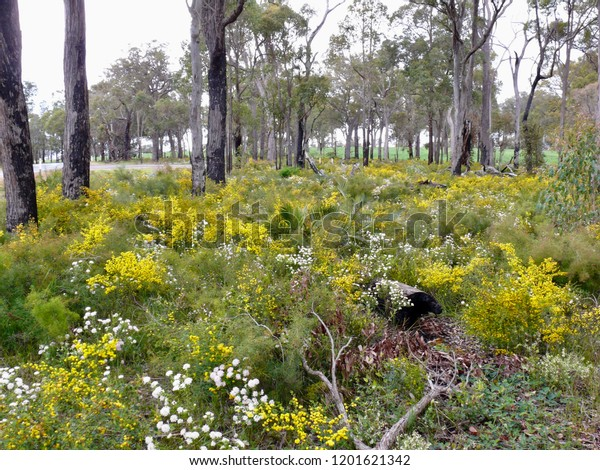 Wildflower Carpet Western Australia
