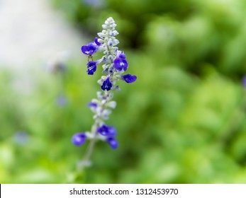 Wildflower field with Bluebonnet