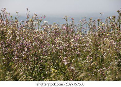 wildflower field next to the sea