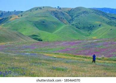 Wildflower field and spring mountain in Arvin--Capital of wildflowers in Southern California