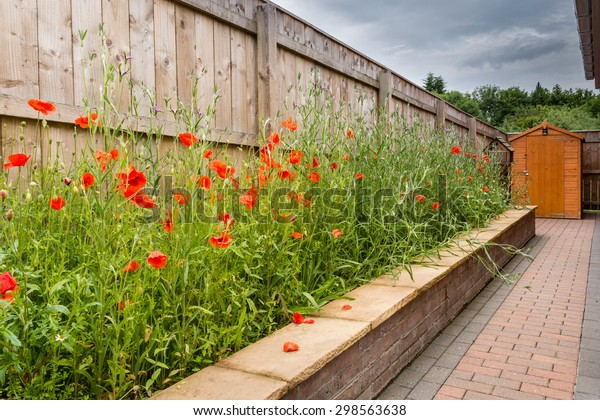 Wildflower Garden / A raised Wildflower Garden consisting mainly of poppies and corncockle in July