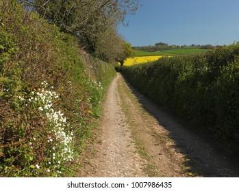 Wildflower hedges on farm