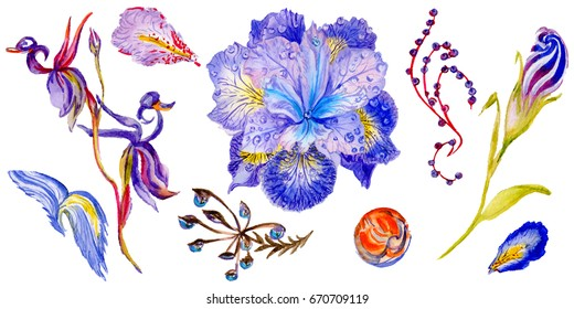 Wildflower iris flower in a watercolor style isolated. Full name of the plant: iris. Aquarelle wild flower for background, texture, wrapper pattern, frame or border.