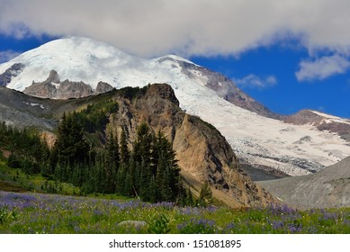 Wildflower meadow and Emmons glacier, Mount Rainier National Park