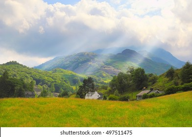 wildflower meadow at the foot of Wetherlan, in the Lake District