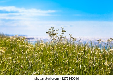 Wildflower meadow near sea, blue sky at sunny day (copy space)