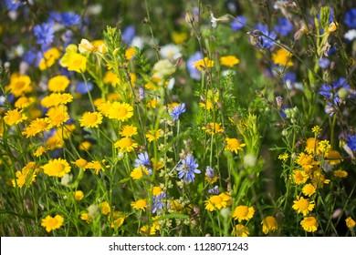 wildflower on the field