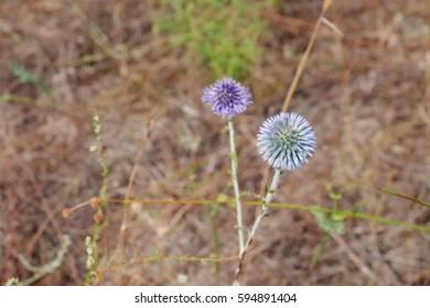 Wildflower on meadow blurred background