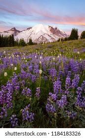 Wildflower Season at Mount Rainier