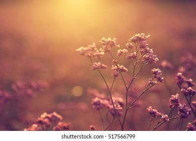 Wildflower in sunset