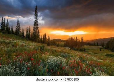 Wildflower sunset in the Rocky Mountains, Colorado, USA.