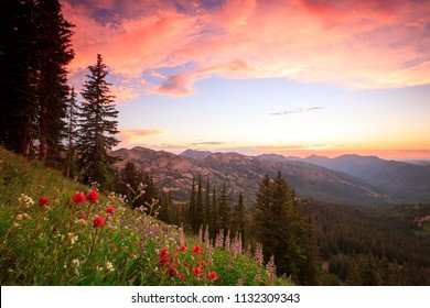 Wildflower sunset in the Wasatch Mountains, Utah, USA.