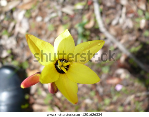 Wildflower Western Australia