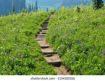 Wildflowers abound in the green grass on both sides of the steps on a dirt hiking trail in the Cascade mountains at Mount Rainier National Park in Washington state on a beautiful August morning.