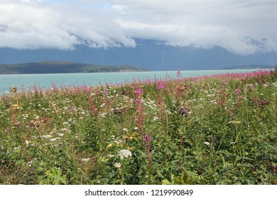 Wildflowers along the shore of Chilkat Inlet at Glacier Point, Alaska on a partly cloudy summer day.