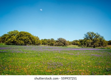Wildflowers along Texas backroads with blue sky and the Moon