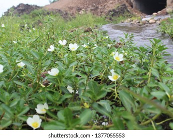 wildflowers beside the river