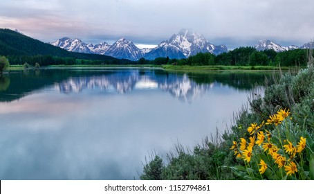 Wildflowers bloom along the banks of the Snake River and Oxbow Bend in Grand Teton National Park Wyoming