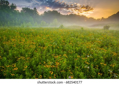 Wildflowers in Bloom in Hocking County Ohio at Sunrise