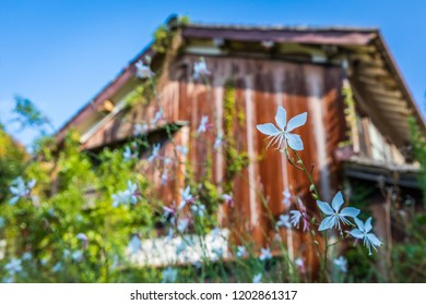 Wildflowers bloom near a rusting old building in Ohmori, a historic and scenic village in the Iwami Silver Mine distric of Shimage, Japan