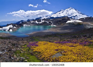 Wildflowers Blooming on Mount Baker /  Mount Baker Summer Bloom