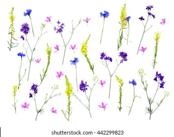 Wildflowers: Cornflower (Centaurea cyanus), Linaria vulgaris (common toadflax, butter-and-eggs), Consolida (larkspur) and Malva sylvestris on a white background. Flat lay