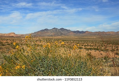 Wildflowers and the desert - Valley of Fire State Park, Nevada