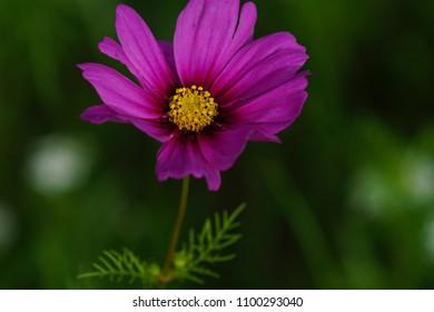 Wildflowers of Eastern North Carolina