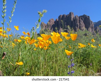 Wildflowers in the foreground with Superstition Mountain in the background