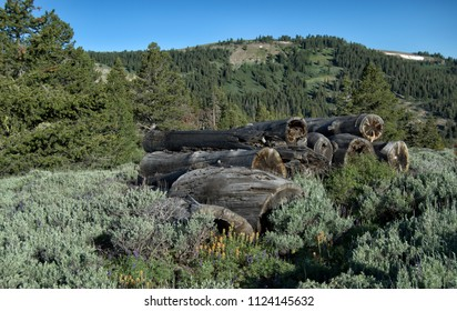 Wildflowers in front of old weathered logs surrounded by sagebrush and pine trees with a mountain in the background.