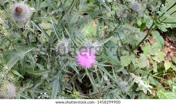 Wildflowers growing by a castle in Scotland.