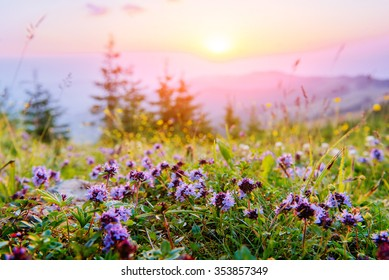 wildflowers in the mountains at sunset