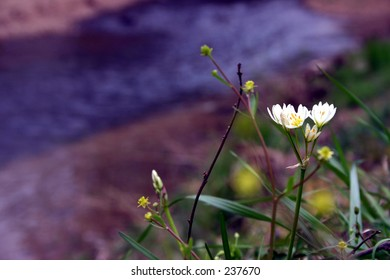 Wildflowers on the bank