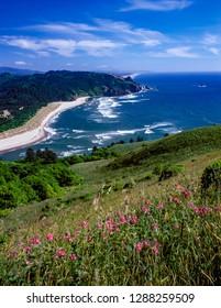 Wildflowers on Cascade Head, looking south toward Lincoln City, Oregon coast